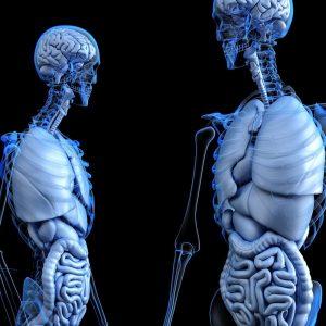 Osteoporosis - Flexsion Ortho